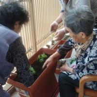 ゴーヤの苗を植えます!